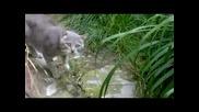 комшийски котки се карат