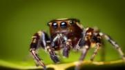 Паяци оплетоха в мрежата си градче в Гърция