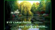 Плачеща върба... ...(с поезията на Ивелина Никова)...(music Ernesto Cortazar)...