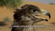 """Рисковете при обучение на степен орел (""""Без багаж"""" еп.152 трейлър)."""