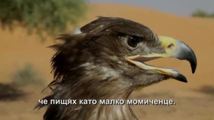 Рисковете при обучение на степен орел (
