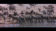 Животните са прекрасни хора - част 4