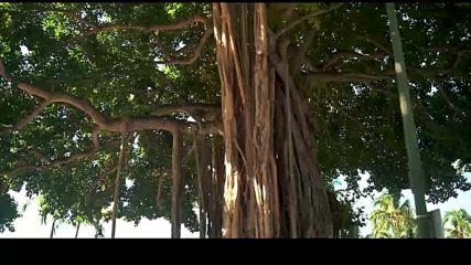 Лудия репортер Пакости в Jurassic Park Дани се вихри в Хавай