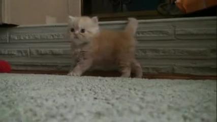 Невероятно слатко коте