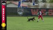 Куче се включва в играта