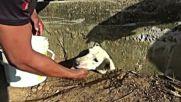 Уникална операция за спасяването на едно куче