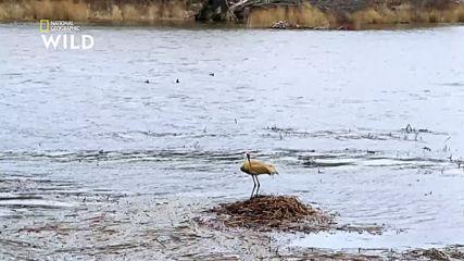 Потопът и канадските жерави