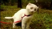 Коте се шокира