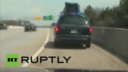 USA: Police seize puppies dangerously attached to car roof