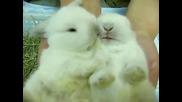 Пухкави Сладки Зайчета