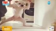Обичат ли кучетата да се къпят?