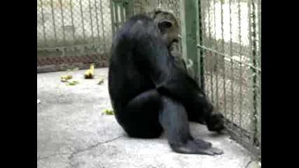 maimunata v starozagorskiq zoopark 2