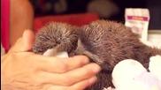Подарък от сладко ленивче!