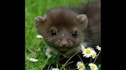 Малки и много сладки животинчета.wmv