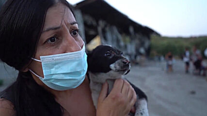 Greece: Migrants and animal welfare activists take care of stray cats and dogs at burned Moria camp