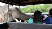 Любопитно слонче