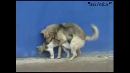 Ужас!!!какво Си Мисли Че Прави Това Куче:)