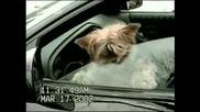 Кучета - Смях