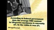 Топ 10 мита за марихуаната