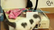 Сладко коте играе с кутия