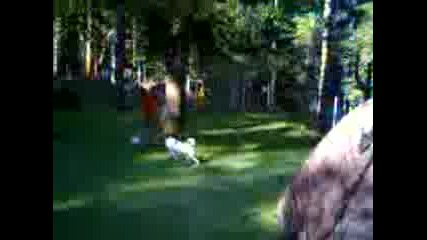 как се играе мач с куче (гледайте от далече) част 1
