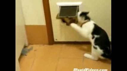 Котка се гаври с куче