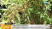 В Монтанско се притясняват от непочистено корито
