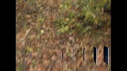 Евтини дърва за огрев пускат в Пловдивско