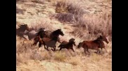 Ennio Morricone - Ecstasy Of Gold - Horses