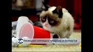 Посвещават холивдуска продукция на Grumpy Cat