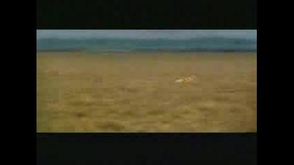 Едно Много Глупаво Животно (смях)