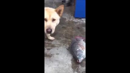 Куче се опитва да спаси риби