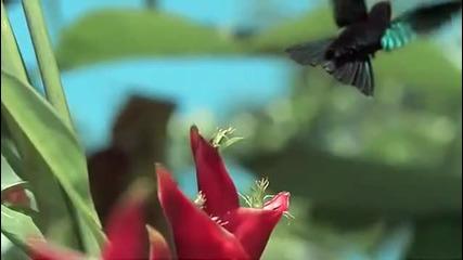 Красотата на Природата :)