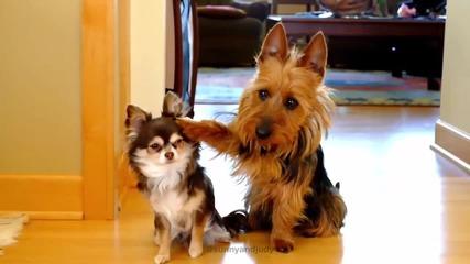 Тя попита кой направи белята в кухнята ? Гледайте какво направи кучето от дясно !