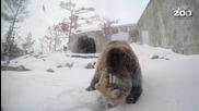 Топлото време във Финландия събуди мечките с месец по-рано