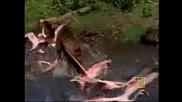 Бабун срещу фламингота
