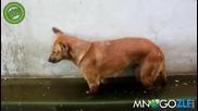 Куче заспива право, замалко да се удави - Смях
