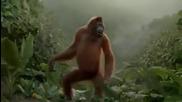 Маймуна танцува на песента I Like To Move It