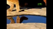 Natures Perfect Predators - Mountain Lion