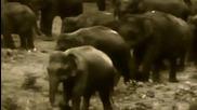 Животът на слоновете около хората - Един филм на Profilm * Hq *