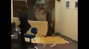 Динозавър разбива офиса, много смях (скрита камера)