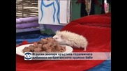 В руски зоопарк кръстиха таралежчета албиноси на британското кралско бебе