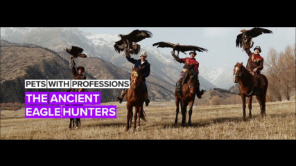 Pets with Professions: Wild Eagles are hunters in the Kyrgyz mountains