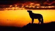 Блатной удар - Одинокий волк - Превод