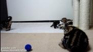 Ninja kittens train and play. Part 1.котята ниндзя тренируются.