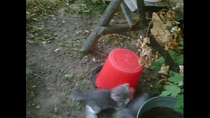 Маша и неините котета