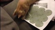 Котка може да види по-илюзия змия!