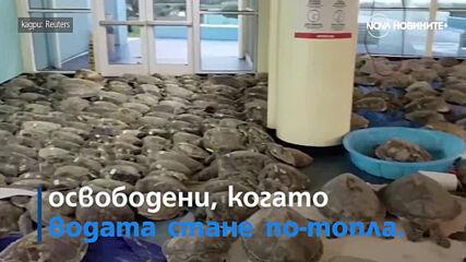 Поредна мисия до Марс и Спасяване на хиляди замръзнали костенурки