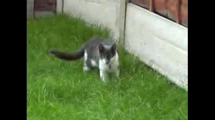 Когато Котките Атакуват!