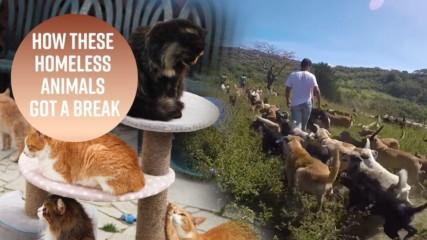 700 кучета и 800 котки: До колко далеч ще стигнеш, за да спасиш животните?